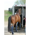 Транспортировка лошади